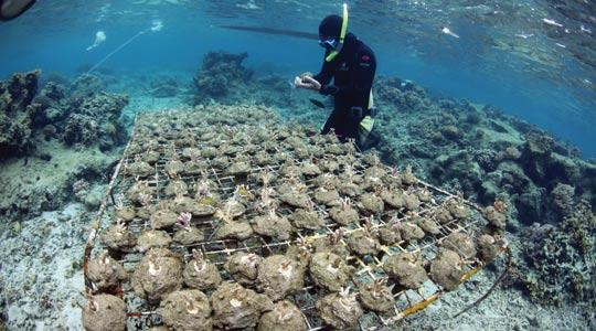 Coral-Reefs-6