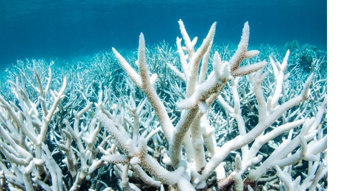 Coral-Reefs-7