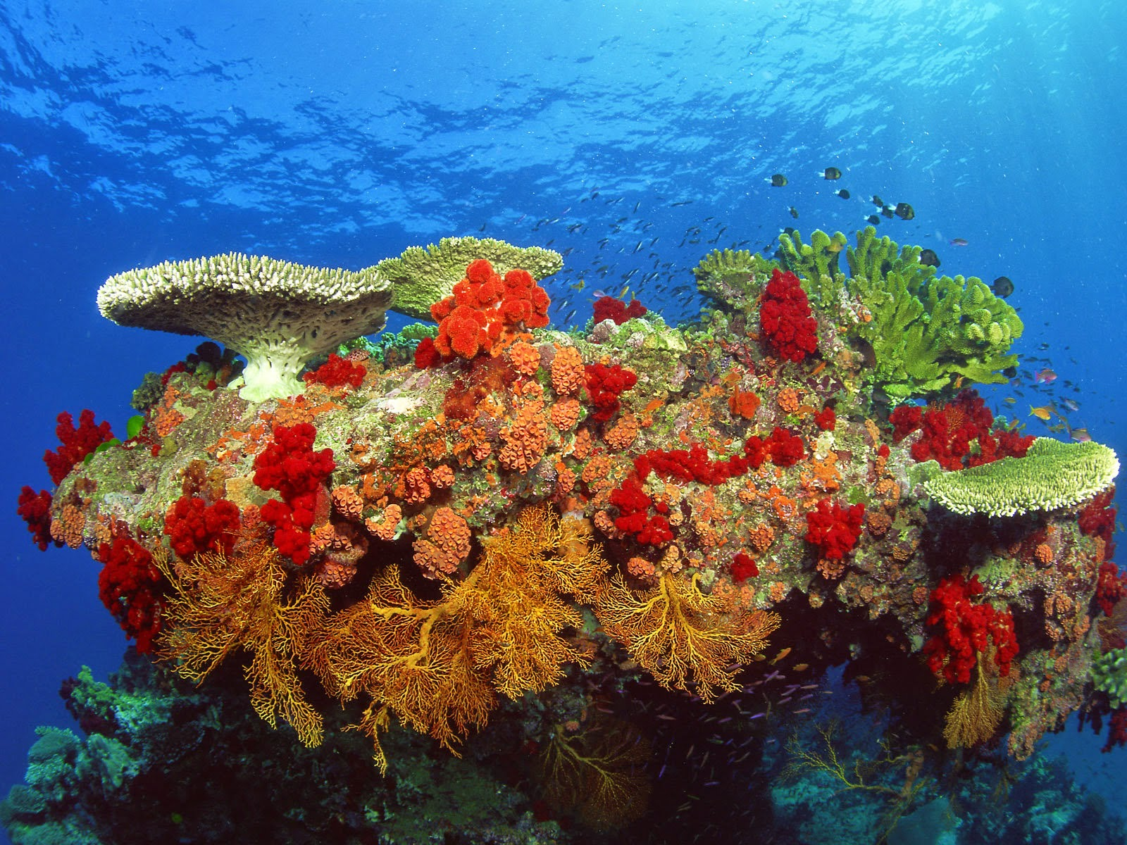 Coral-Reefs-3