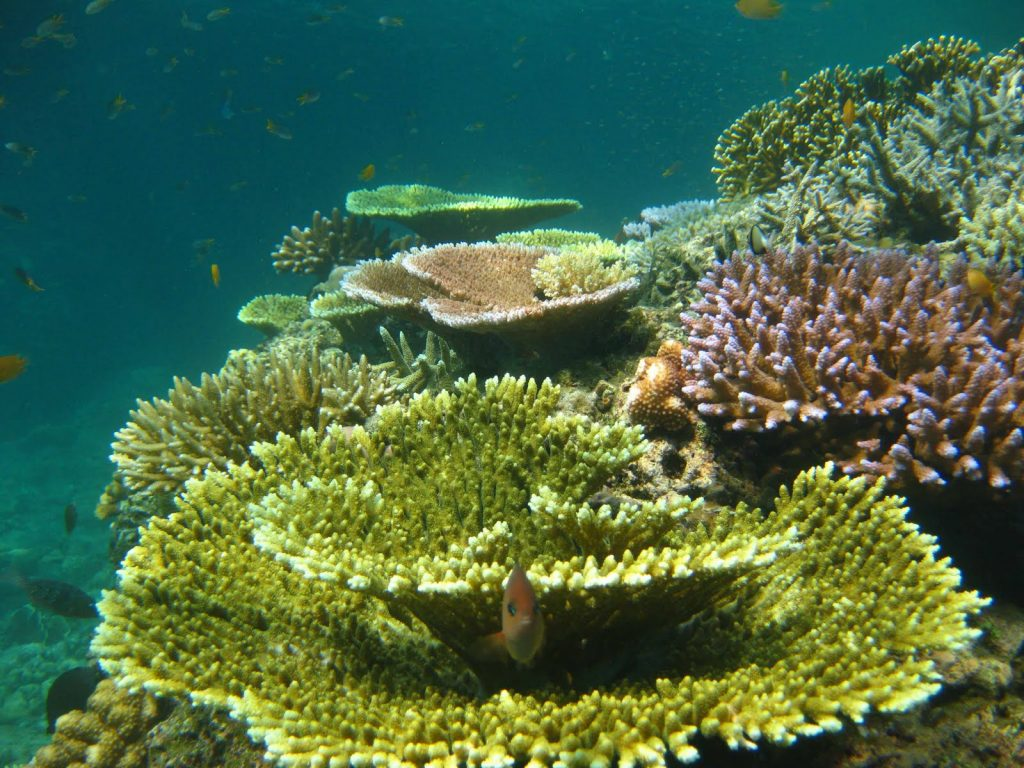 Coral-Reefs-5