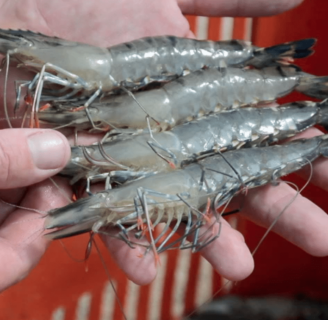 Shrimps: Characteristics, properties, benefits, nutrients and more