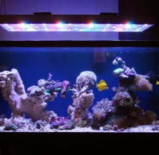 Decorating Aquariums :  The best algae to decorate domestic aquariums….