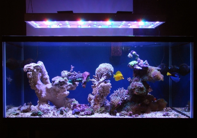 Decorating Aquariums Ideas
