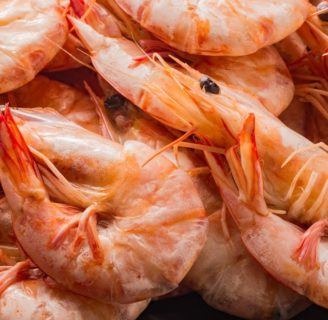 Pistol Shrimps: Everything you need to know about this Amazing