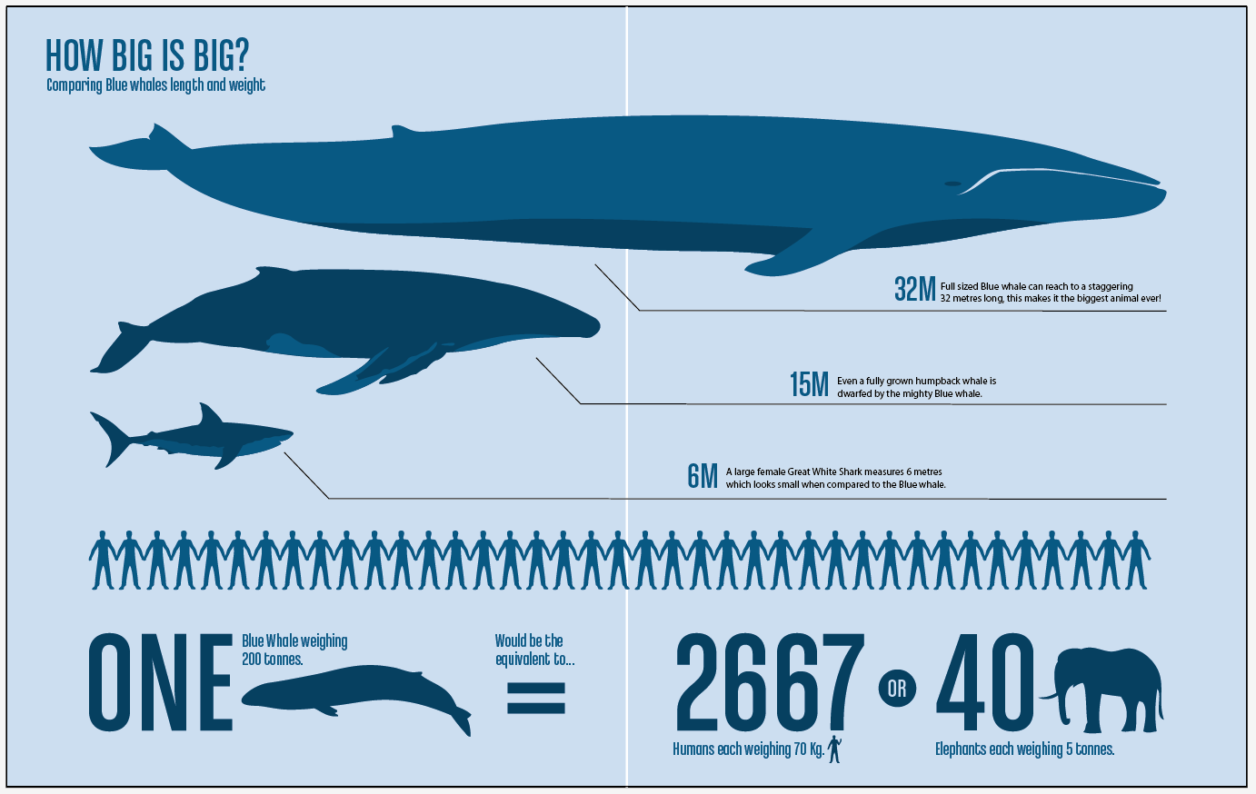 Blue Whales: Characteristics, threats and more, about the ...