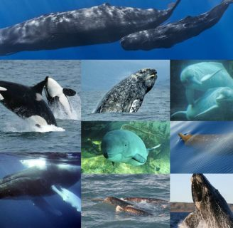 How Do Whales Breathe:  Techniques and characteristics…