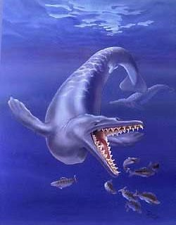 Prehistoric Whales: Know all about this incredible cetacean