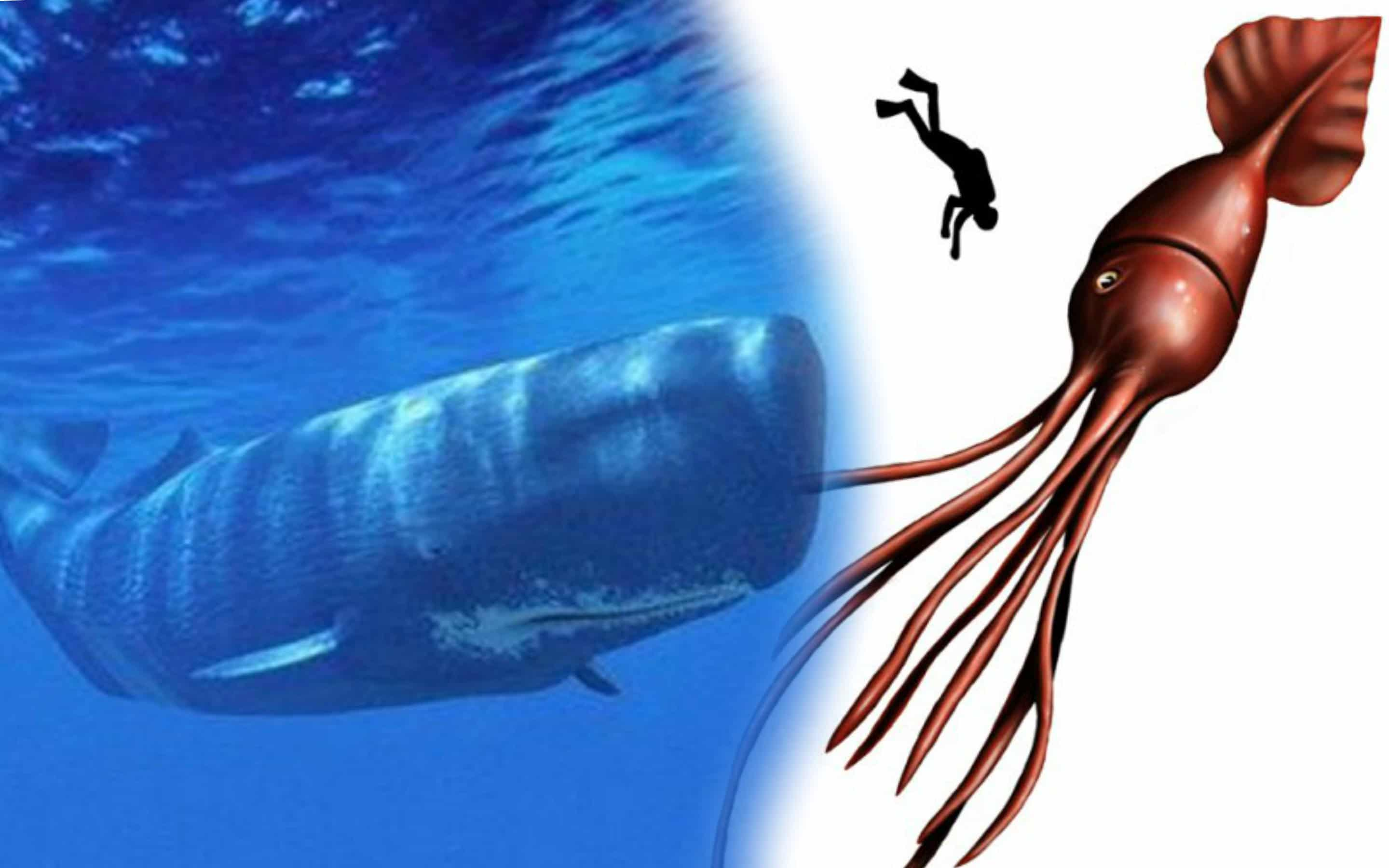 sperm whale essay Dolphin vs whale physiology like all cetaceans, whales and dolphins are descendants of land-living animals that returned to fresh or salt water after living millions of years on land.