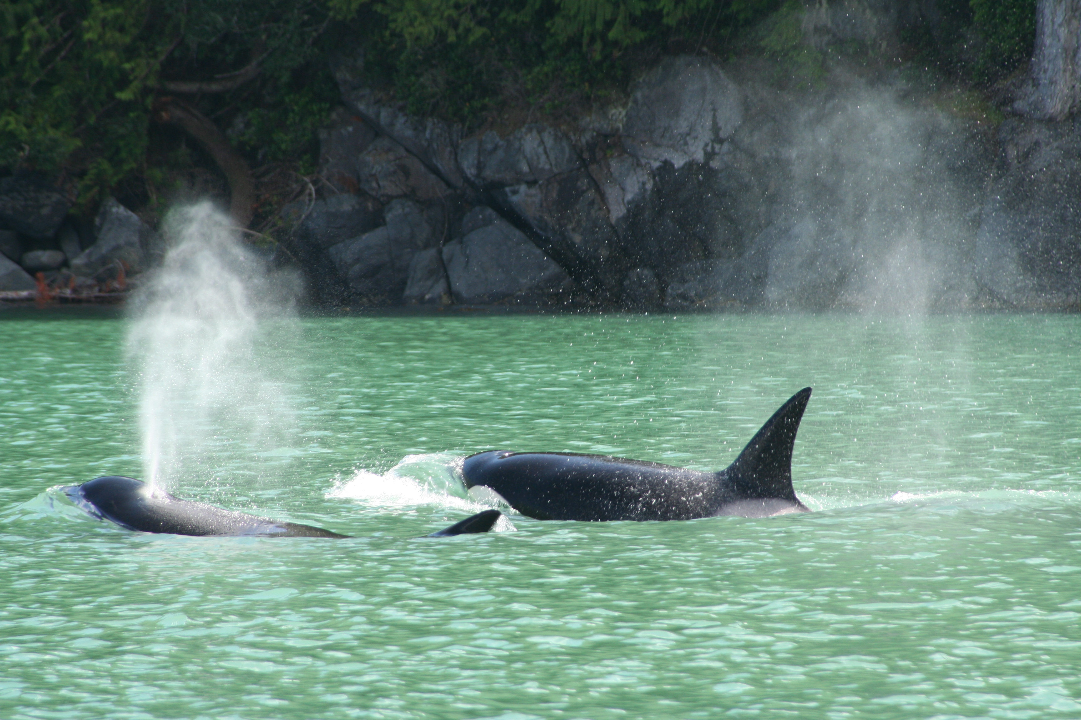 types of whales: orcas and glacial waters