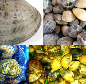 Clams: Characteristics, properties, reproduction and more