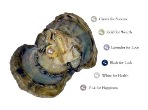ooysters: wish pearl in oysters