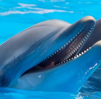 Bottlenose Dolphins:  Main characteristics of these lovely creatures