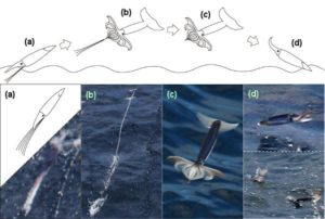 flying squids: movements