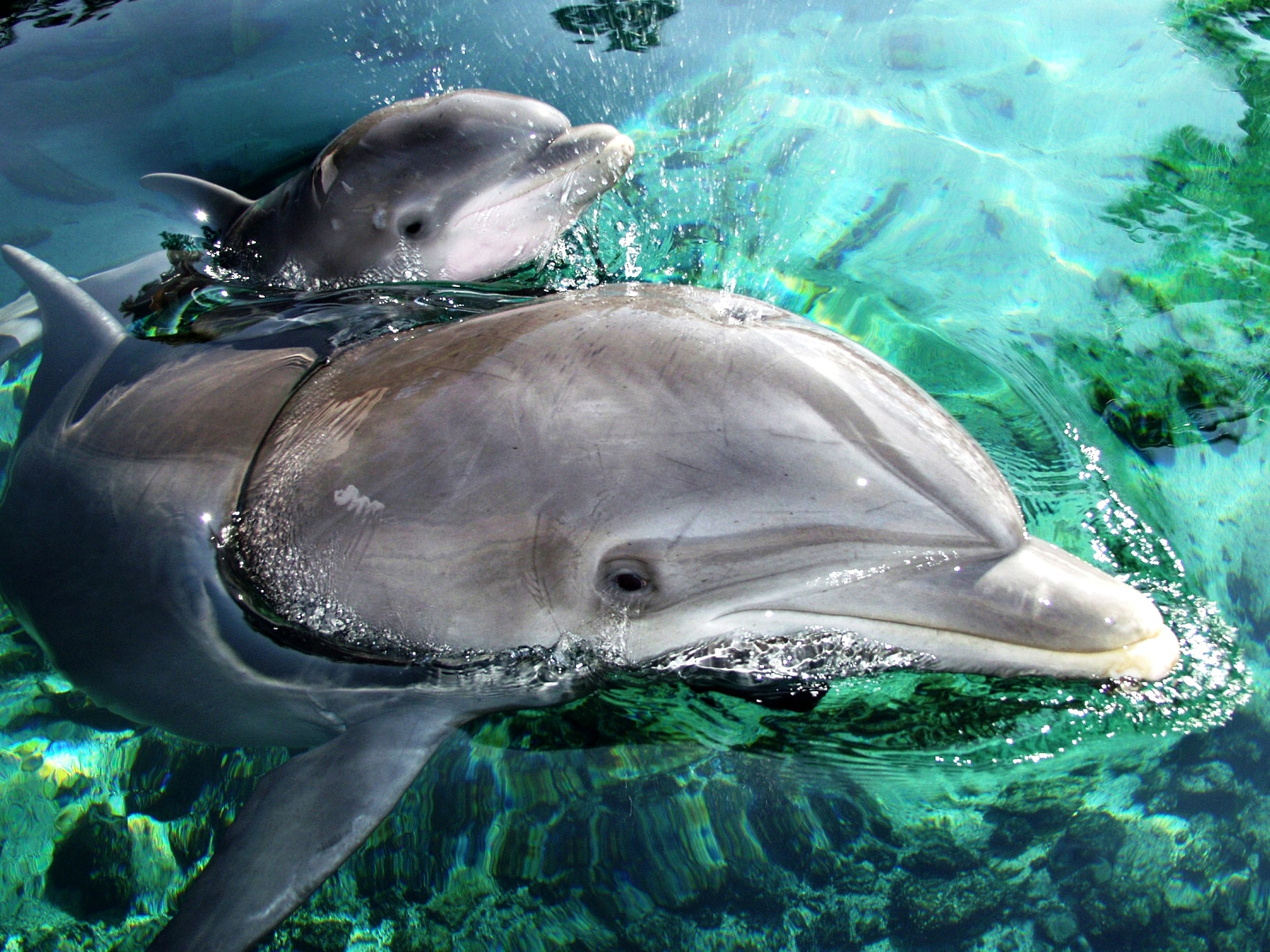 Dreaming About Dolphins: Meaning and considerations that you