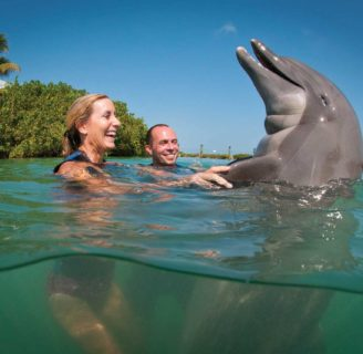 Dreaming About Dolphins: Meaning and considerations that you should have