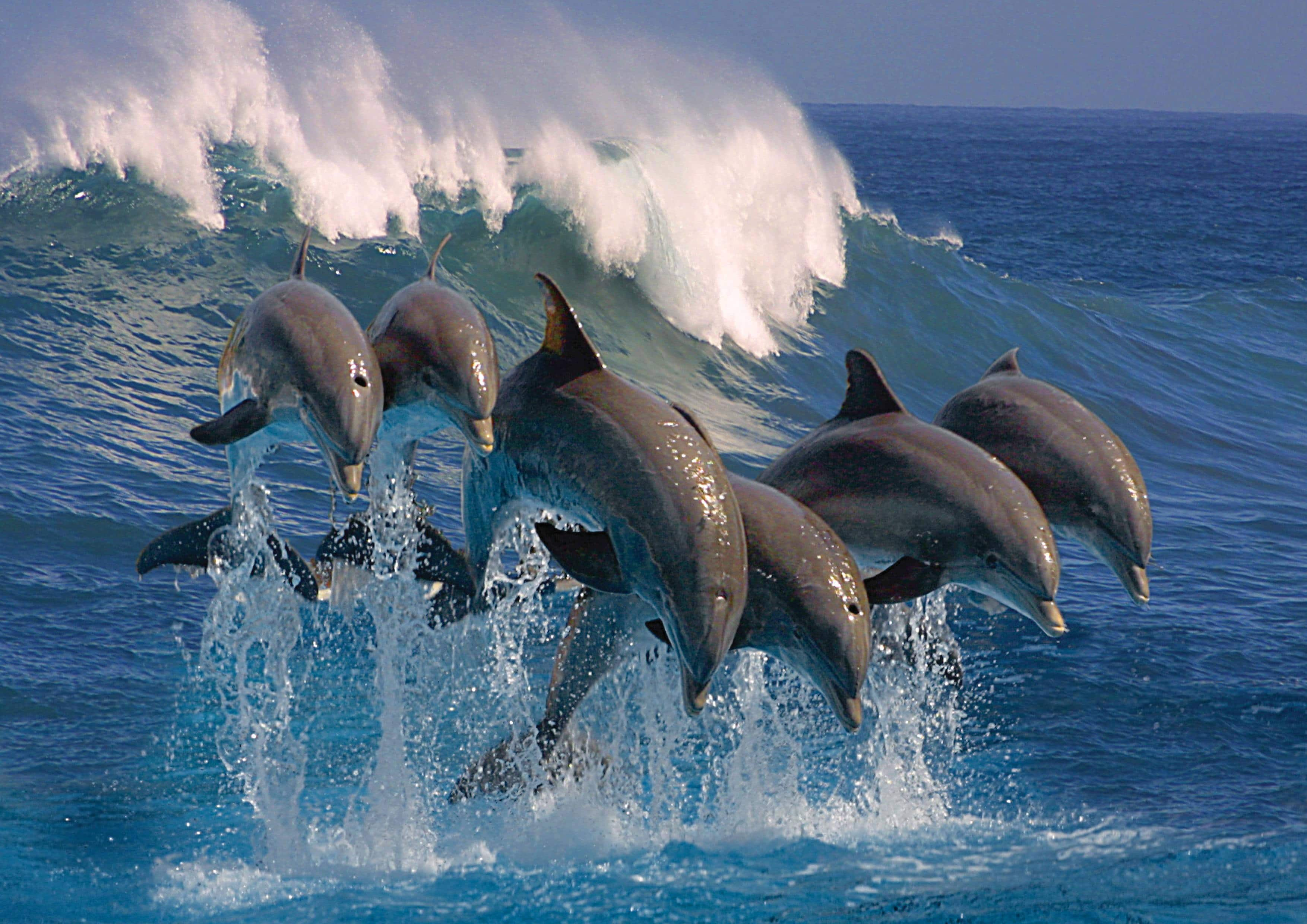 what is a group of dolphins called