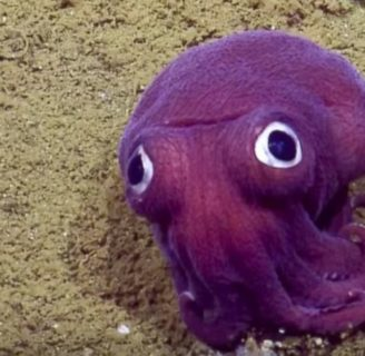Purple Squid: Meet this weird and striking creature