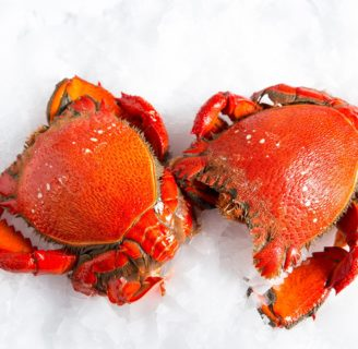 Crabs: Characteristics, habitat, alimentation habits and more…