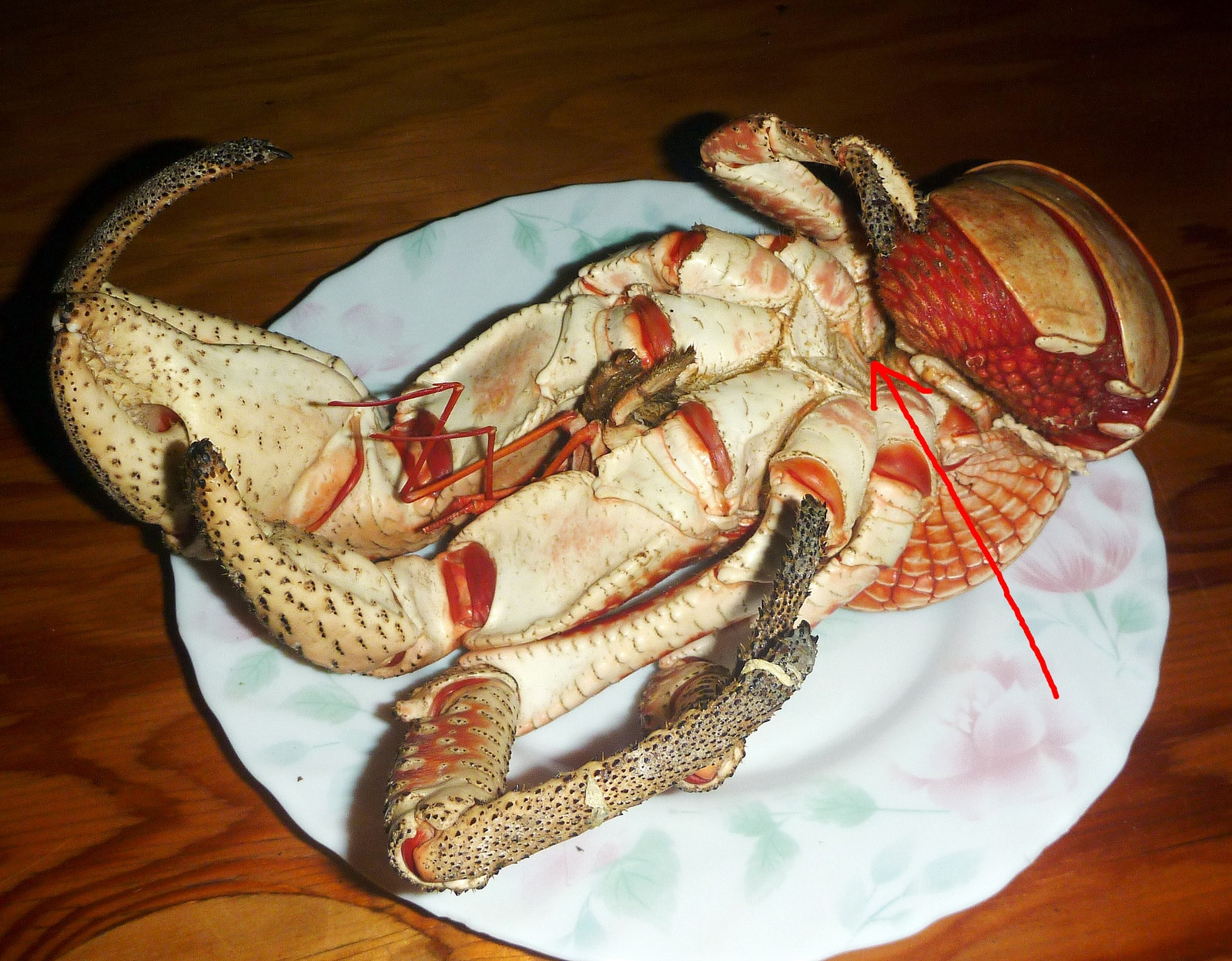 Poisonous Crabs: Types,characteristics and more….