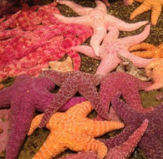 Starfish: Characteristics, reproduction, habitat, types and more