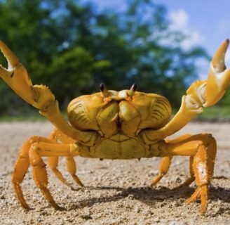 Why do Crabs Walk Sideways? Learn about these funny crustaceans…