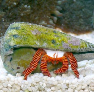 What do hermit crabs eat? Keep learning about these wonderful creatures