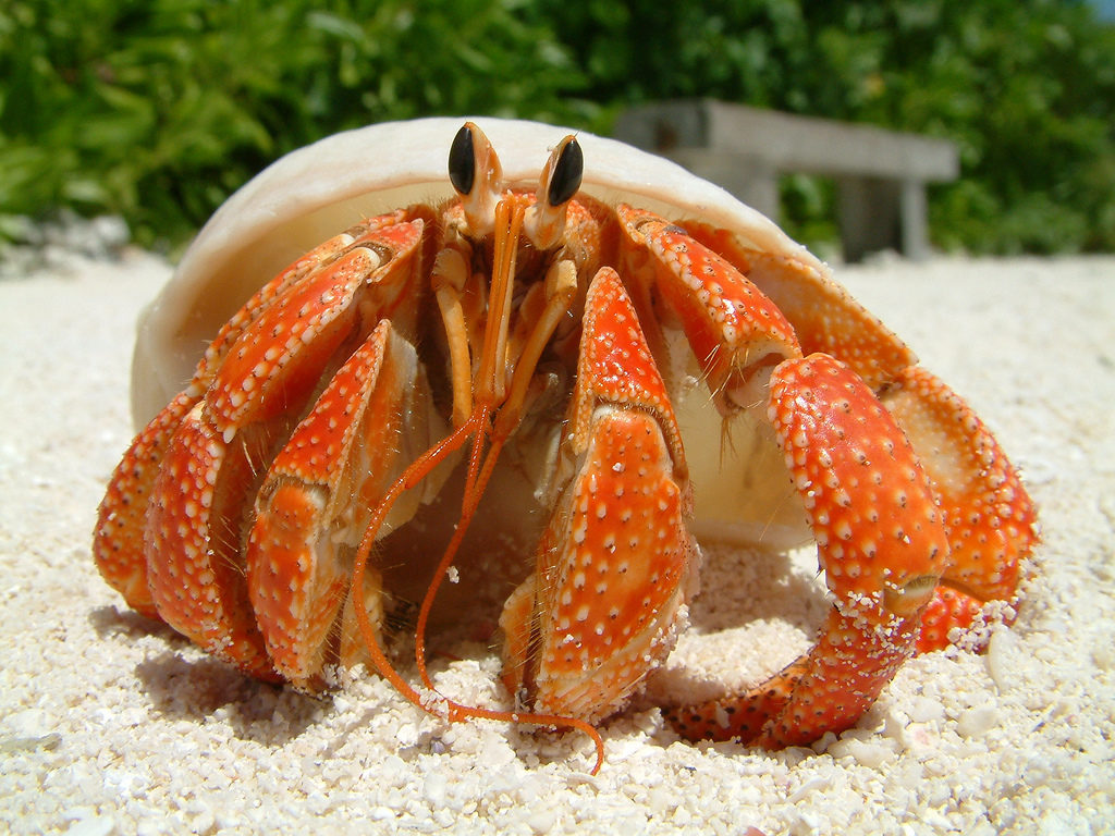 Types Of Crabs Learn All About The Different Crabs Species,How To Make Candles
