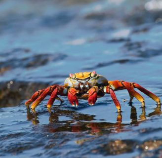 Where do crabs inhabit?: Everything you need to know