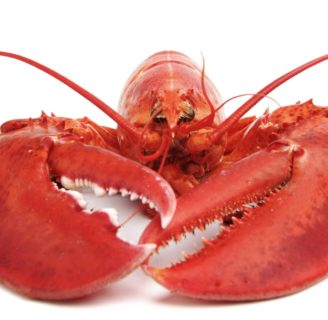 Lobsters: Characteristics, habitats, reproduction and more