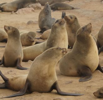 The Seals: Characteristics, habitats, main types, threats and more