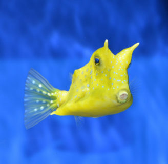 Horned Marine Species: Learn about nature and its wonders