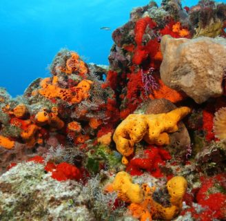 Sea Sponges: Characteristics, reproduction, uses and more…..