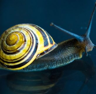 Snails: Characteristics, properties, types and more….