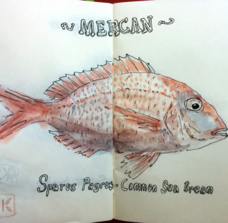 Common Seabream: Characteristics, reproduction, habitat and more…