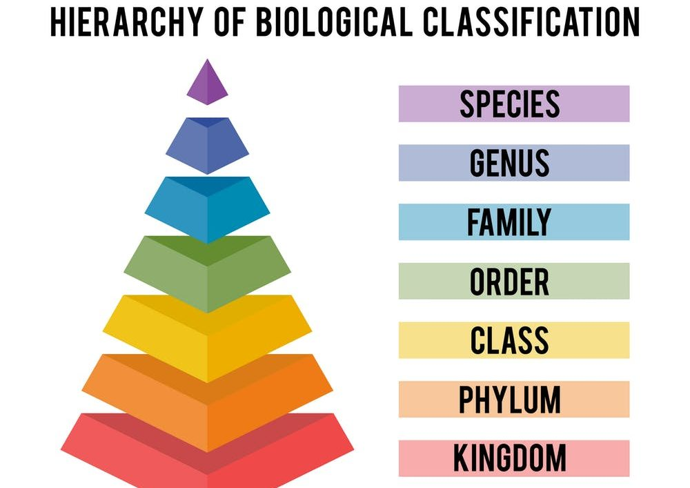 Northern Pikes: Hierarchy of Biological Classification
