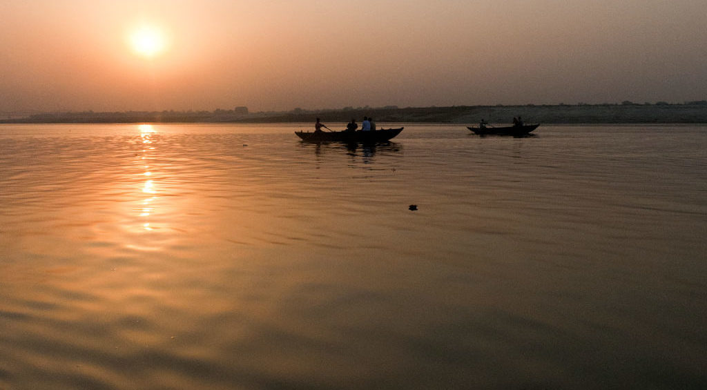 All about zebra fish: ganges River India