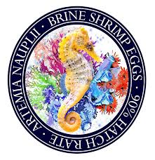Emperor Angel Fish. brine shrimp