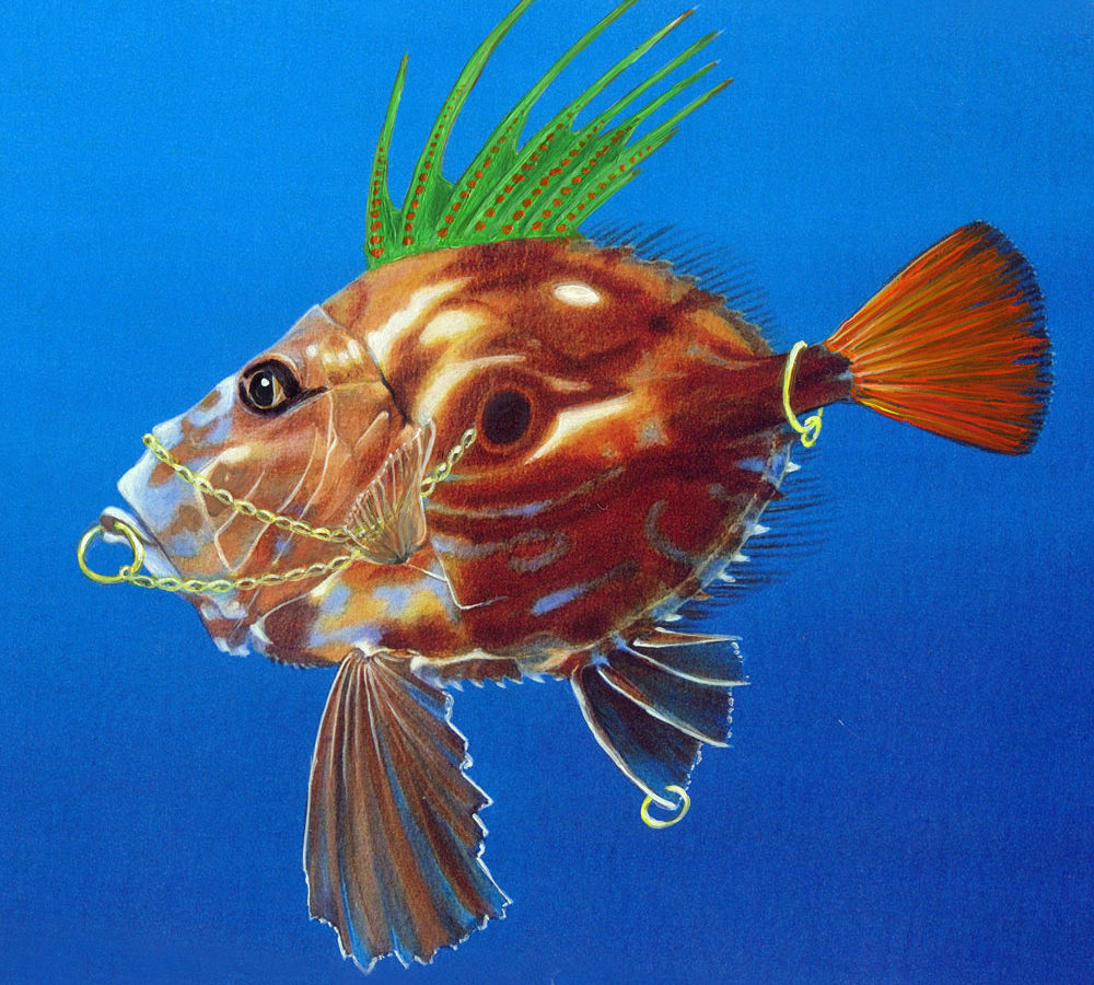 John Dory Fish : just a wonderful a very funy species