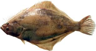 Dover soles: sand sole