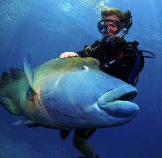 Humphead Wrasse: Characteristics, reproduction, threats and more….