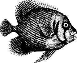 Tilapia Fish: Characteristics, types, breeding and  more….