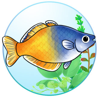 Boeseman's rainbowfish: Characteristics, habitat, reproduction and more…