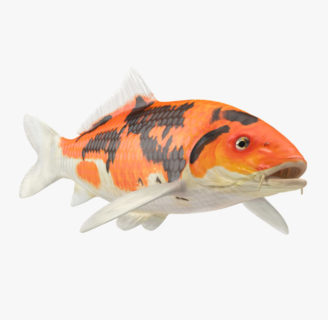 Koi fish: Characteristics, history, types and more….