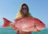 Northern Red Snapper:  Characteristics, habitat, benefits and more…