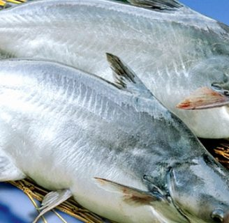 Basa Fish: Characteristics, reproduction, properties and more…