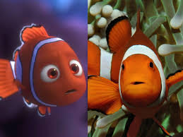 Clown Anemonefish: Characteristics, types, care and more