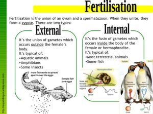 Tropical Fish: types of fertilizations