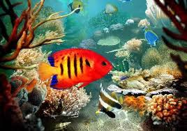 Tropical fish: Types and characteristics