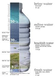 freshwater fish: types of waters